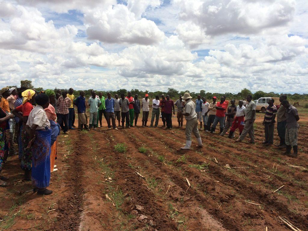 Lokala jordbrukare i SAFE-MET projektet i Zambia.