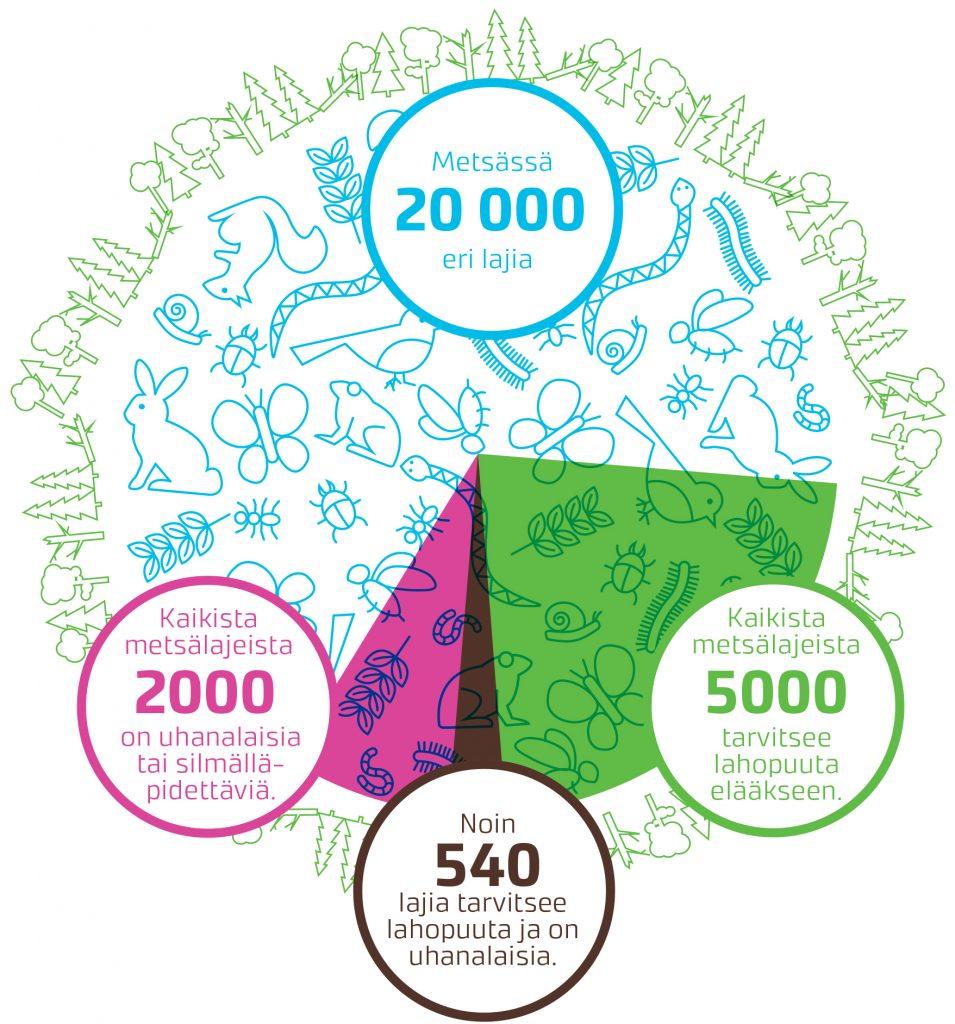 Infografiikassa lukee seuraavat tiedot: Metsässä on 20 000 eri lajia. Kaikista metsälajeista 2000 on uhanalaisia tai silmälläpidettäviä. Kaikista metsälajeista 5000 tarvitsee lahopuuta elääkseen. Noin 540 lajia tarvitsee lahopuuta ja on uhanalaisia.